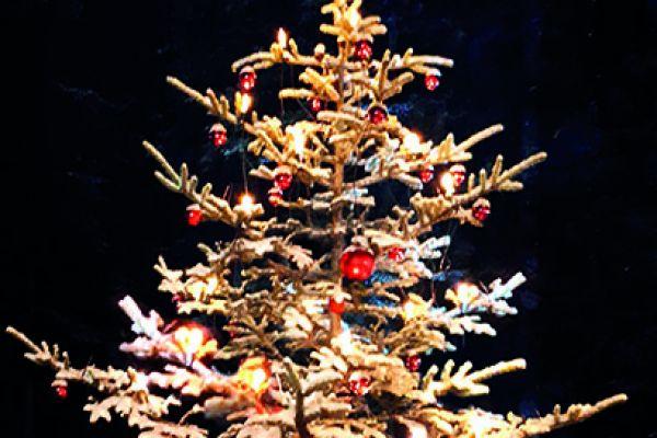 weihnachtsbaum-l08AFDEA2-2548-81EE-C2EE-D7B97384CA1E.jpg